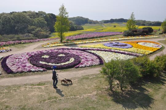005花さじき1