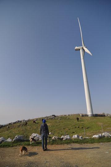 519風車