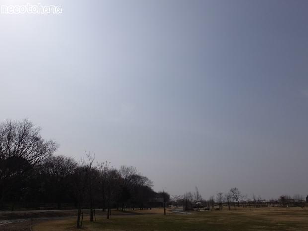 DSCF1498公園1