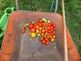 落下トマト