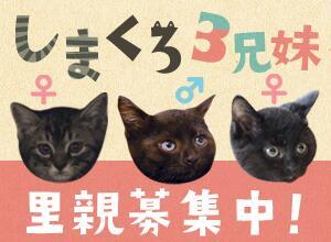 shimakuro_banar.jpg