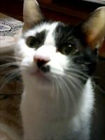 猫屋敷:ふうま