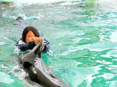 イルカと泳ぐ1