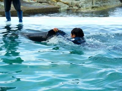 イルカと泳ぐ2
