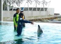 イルカに合図