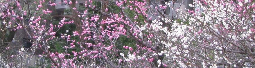 IMG_5031 花盛り