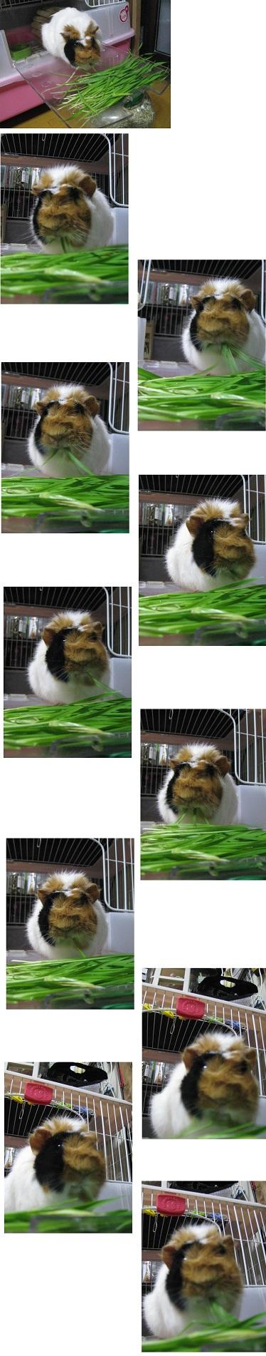 IMG_5350 麦を食う