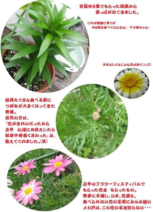 IMG_5382 春が来た
