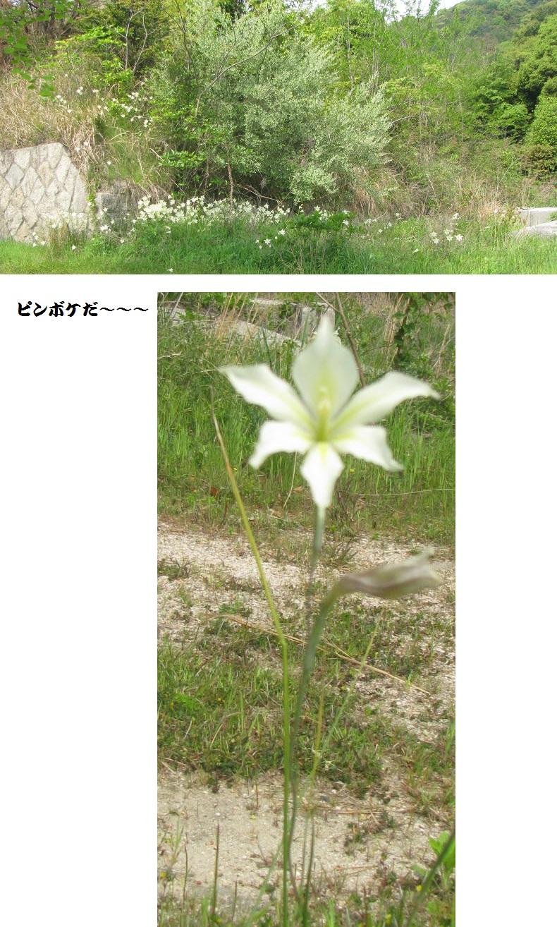 IMG_5450 お花