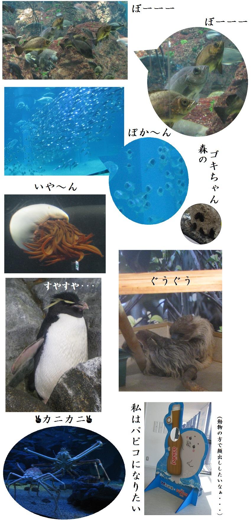 IMG_6851 水族館