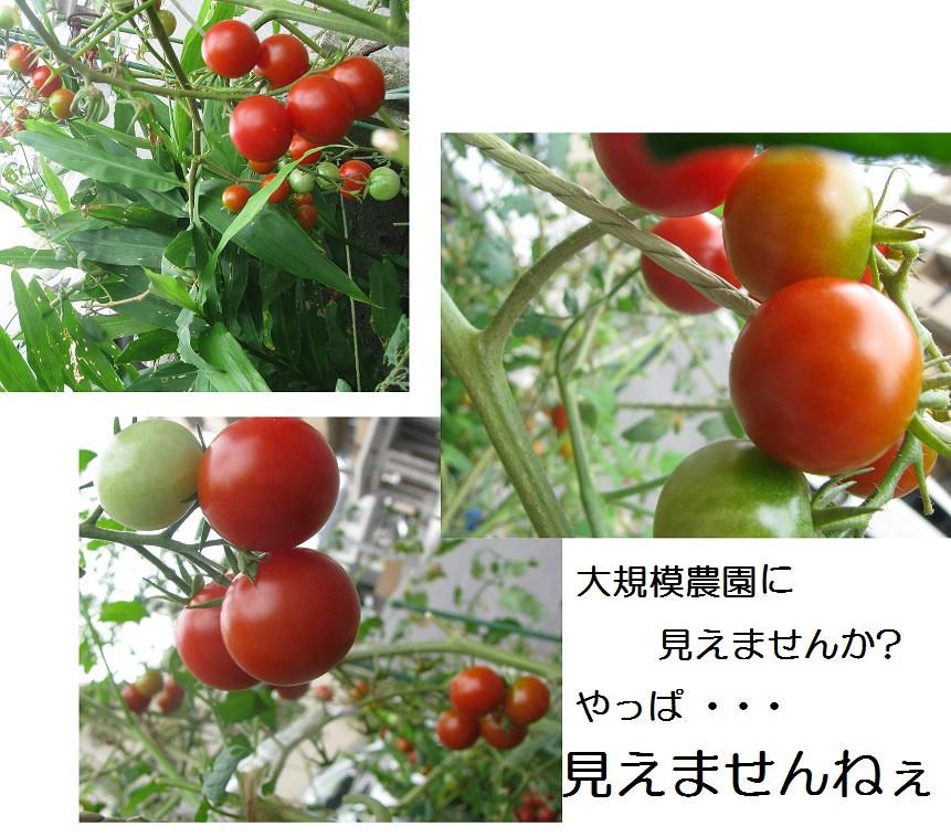 IMG_7099 錯覚