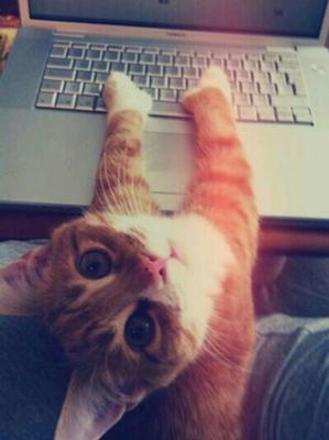 studycat.png