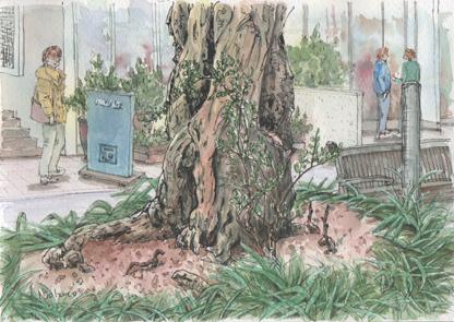 自由が丘緑道の木