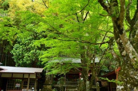 龍門の滝の紅葉
