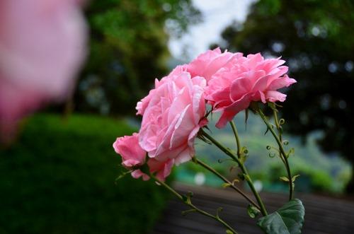 ピンク (2)