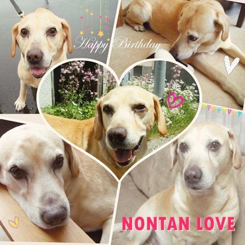 nontan1-fotor042211555.jpg