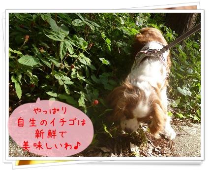 2014052510.jpg