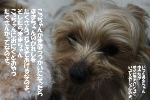 IMG_4103_20140309205522d11.jpg