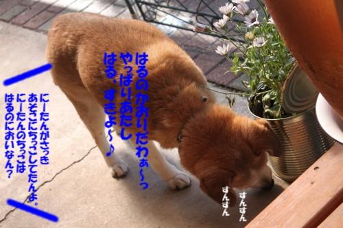 IMG_4243_201403152251510f9.jpg