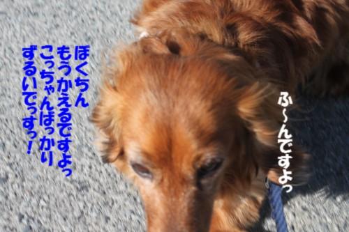 IMG_4395_201403222102150fa.jpg