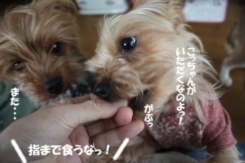 IMG_4511.jpg