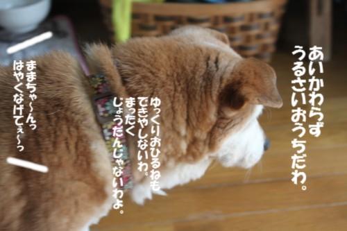 IMG_4568.jpg