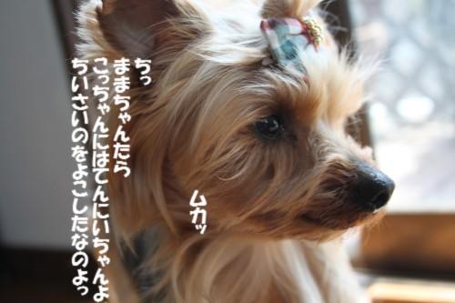IMG_4770.jpg