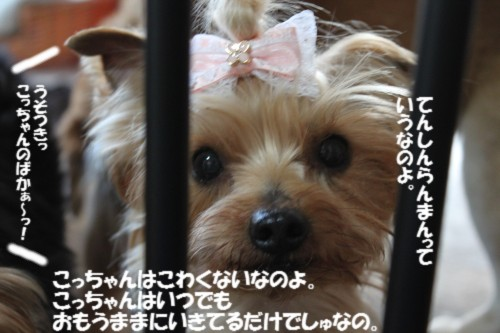 IMG_5049.jpg