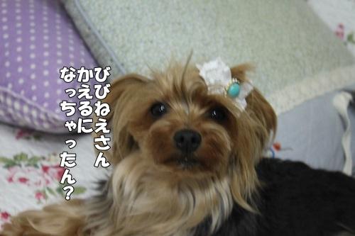 IMG_5680_201405171427076f7.jpg