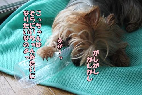 IMG_5780_20140521090413607.jpg