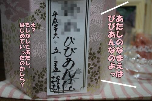 IMG_5903.jpg