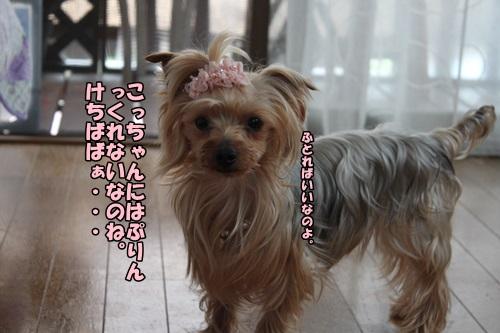 IMG_6071.jpg