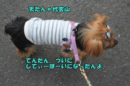 IMG_6511_20140622141530dc4.jpg