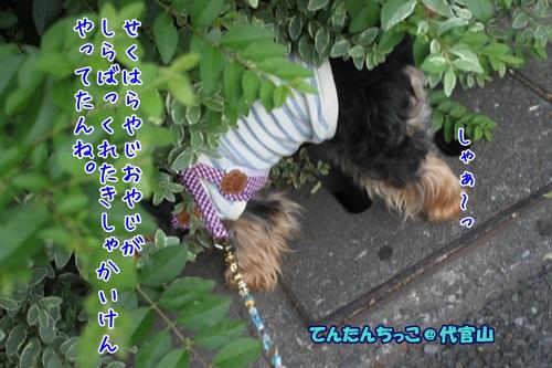 IMG_6514_201406231518118cf.jpg
