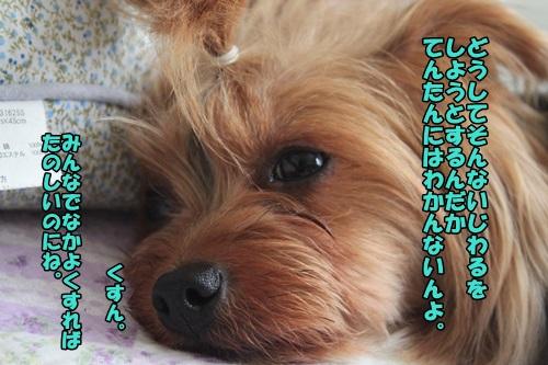 IMG_6522_2014062220270307b.jpg
