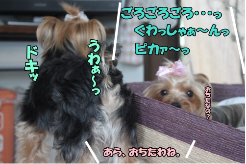 IMG_6570_20140625142720184.jpg