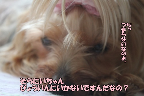 IMG_6726_20140704094138361.jpg