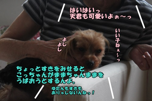 IMG_6872_201407102038344a4.jpg