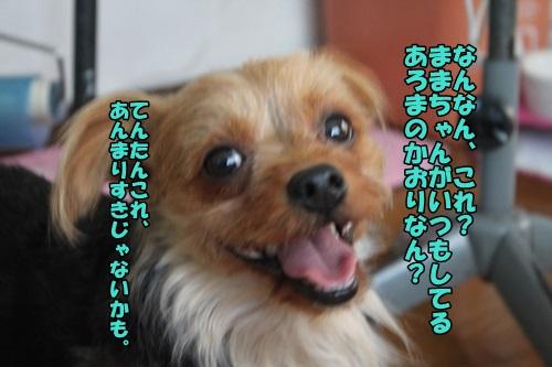 IMG_6919_201407111300564ce.jpg