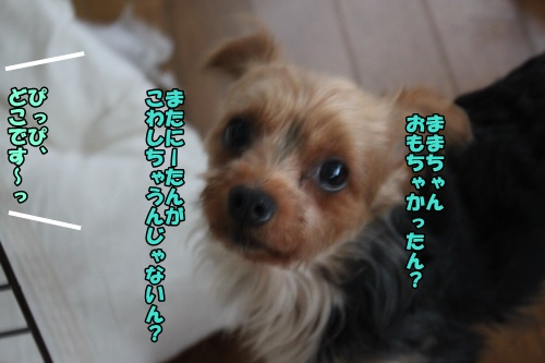 IMG_6948_20140711173855348.jpg