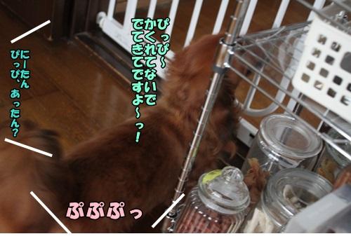 IMG_6951_20140711174149e23.jpg