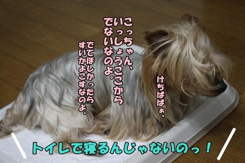 IMG_7106_20140717212713f6c.jpg