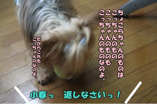 IMG_7144_20140719160416e1e.jpg