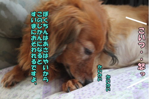 IMG_7152_20140721101237a55.jpg