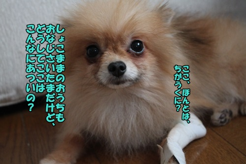 IMG_7350_2014073112000144a.jpg
