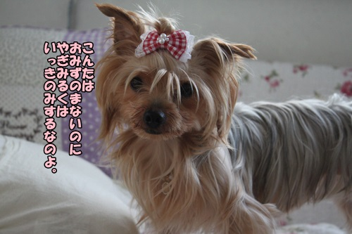 IMG_7365_2014073112160899b.jpg