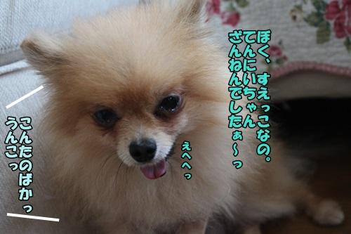 IMG_7370_20140731122704a15.jpg