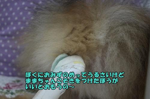 IMG_7501.jpg