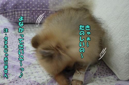 IMG_7539_20140806161928bd8.jpg