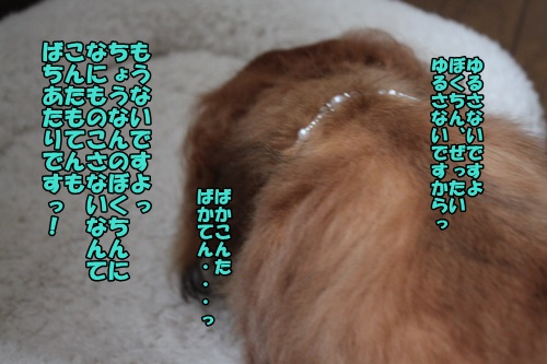 IMG_7645_20140811205913cfa.jpg